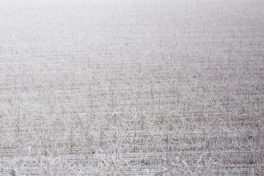 Abstract Nature Winter Backgrounds Close-up Day Field Fog Full Frame Gray Nature No People Outdoors Rime Vineyards In Winter White Color Winegrapes Winegrowing Region Hungary Vineyard Perspectives On Nature