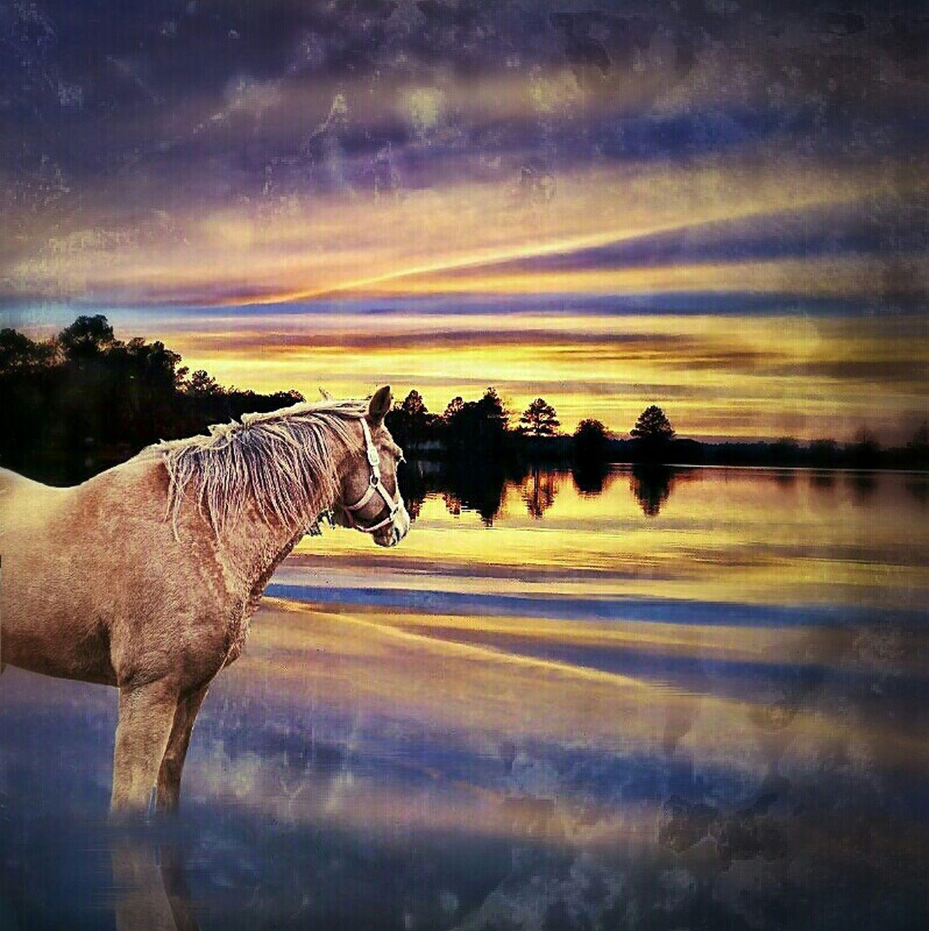 Horses make the landscape beautiful Nature_collection Unitedbyedit