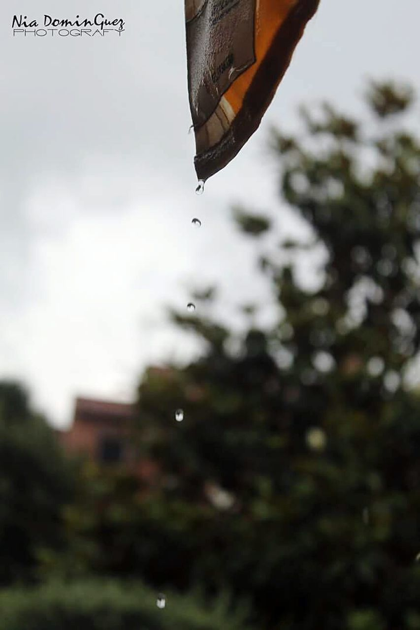 mid-air, hanging, focus on foreground, day, outdoors, motion, no people, low angle view, nature, tree, flying, water, close-up, dripping, sky