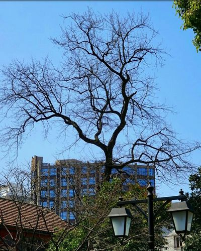 Bare Tree Sky Tree Branch Building Exterior Built Structure No People Text Outdoors City Day Architecture