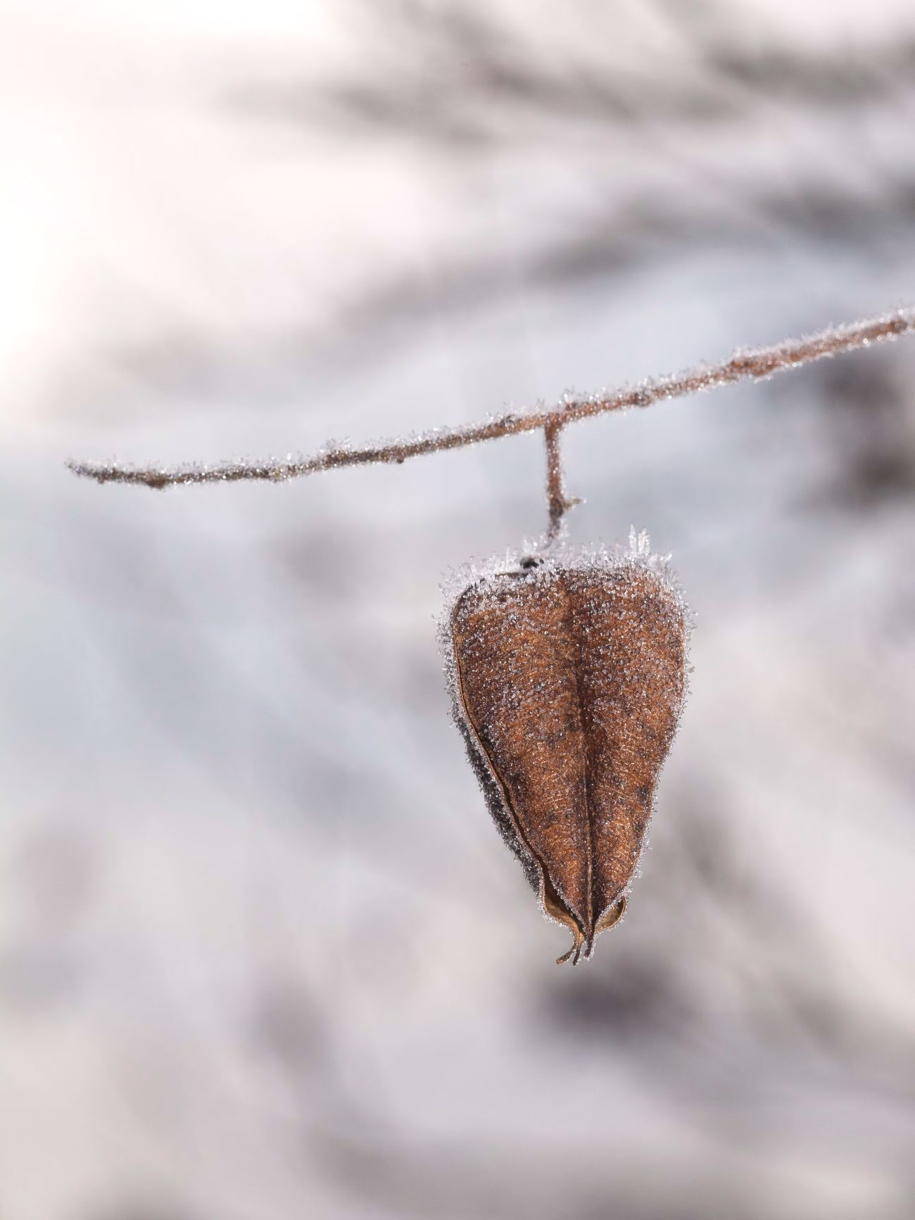 Frozen Heart ❤ I wish you a wonderful start in the week. Winter Close Up Nature Nature_collection Nature On Your Doorstep Purity Lieblingsteil Miles Away Full Frame Canon I LOVE PHOTOGRAPHY 3XSPUnity Germany Fall Beauty Simple Quiet Love EyeEm Gallery Tranquility EyeEm Nature Lover EyeEm Macro Macro Showcase: February Plants And Flowers TreePorn Tranquil Scene Nature's Diversities