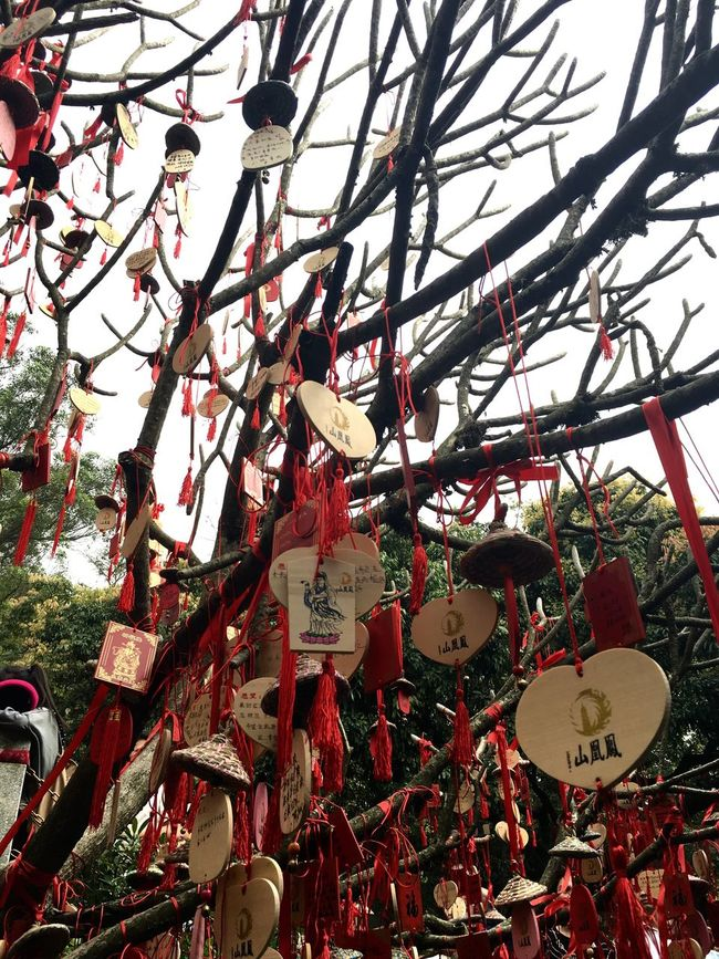 Chinese Wishing Tree at Phoenix Mountain in Baoan - Shenzhen, China Hanging Wishes Wishing Tree Chinese Style Chinese Culture Traditionally Chinese Tree BaoAn Temple Phoenix Mountain Traditional Chinese Chinese Mountain China Shenzhen Buddhist Temple Wish Tree Buddhism Traditional Culture
