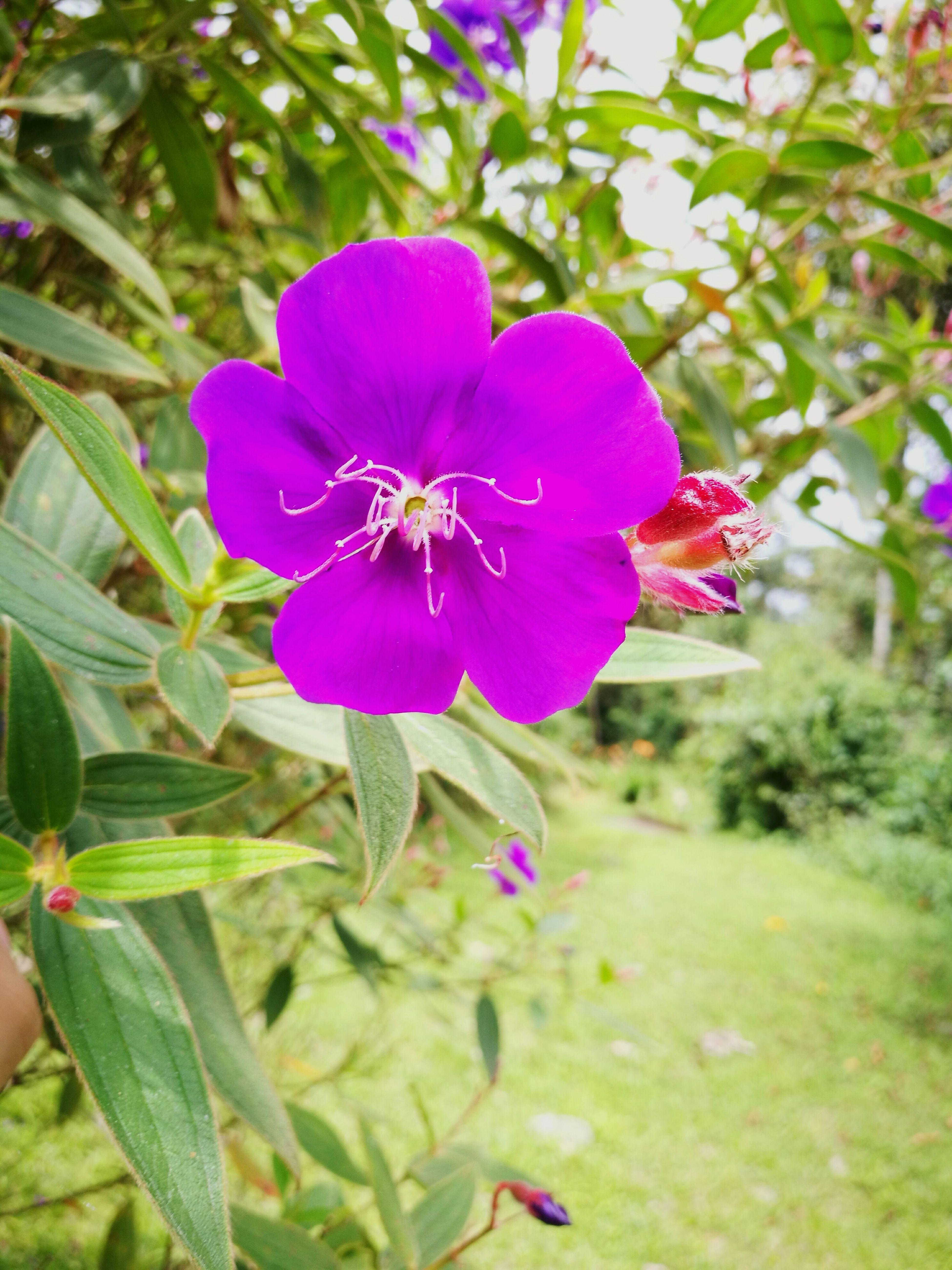 Colors Colorsofnature Beauty In Nature Tibouchina Lepidota Themythofeternallove Close-up