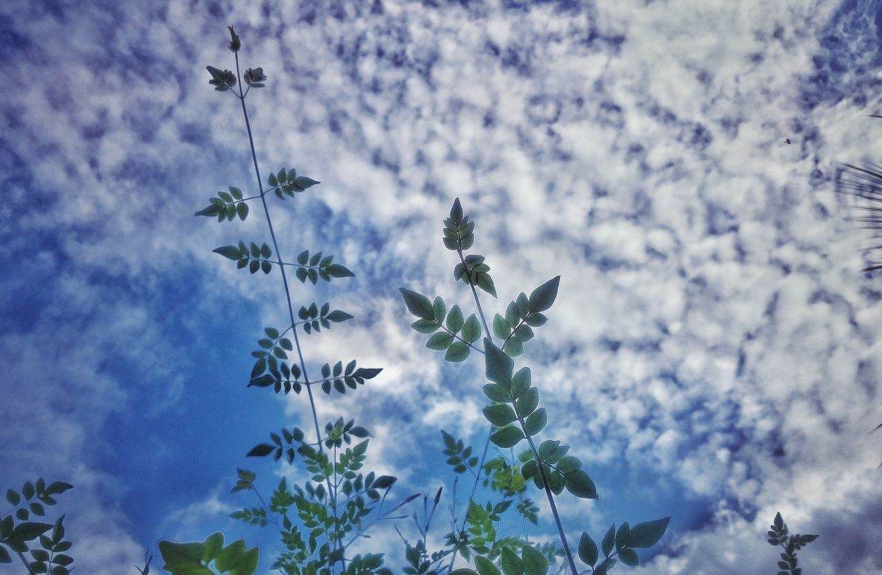 sky, low angle view, cloud - sky, nature, tree, growth, beauty in nature, no people, treetop, outdoors, branch, tranquility, day, close-up