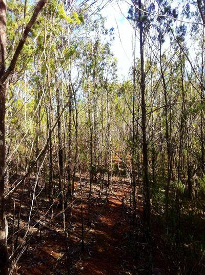 nature lover Taking Photos Enjoying Life EyeEm Best Shots-Trees- TreePorn We Walked Through This
