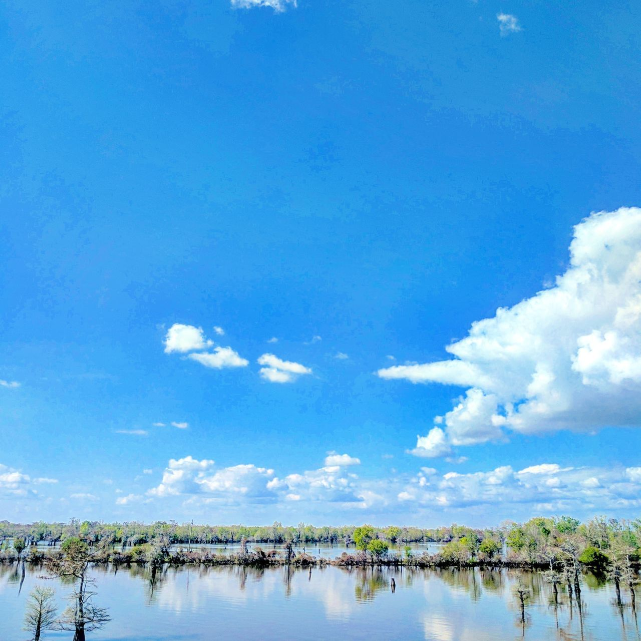Blue Water Sky Nature Tree Day Outdoors No People Lake Beauty In Nature Cloud - Sky Agriculture Solo Women Travelers Tree Nature Bayou Bayous Of Louisianna Bayou Life Outdoors Photograpghy  Outdoor Beauty