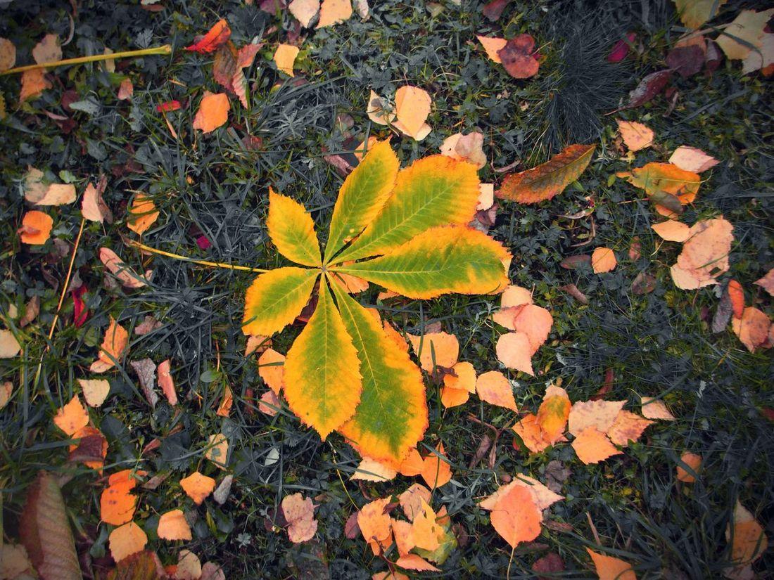 Nature природароссии Leaves Природа Autumn Leaves Autumn Colors осень Autumn осенние листья золотаяосень