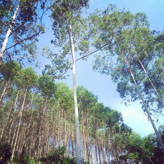 Tree Nature Blue Sky Sunshine ☀ Beautiful Scenery Nice! 😚