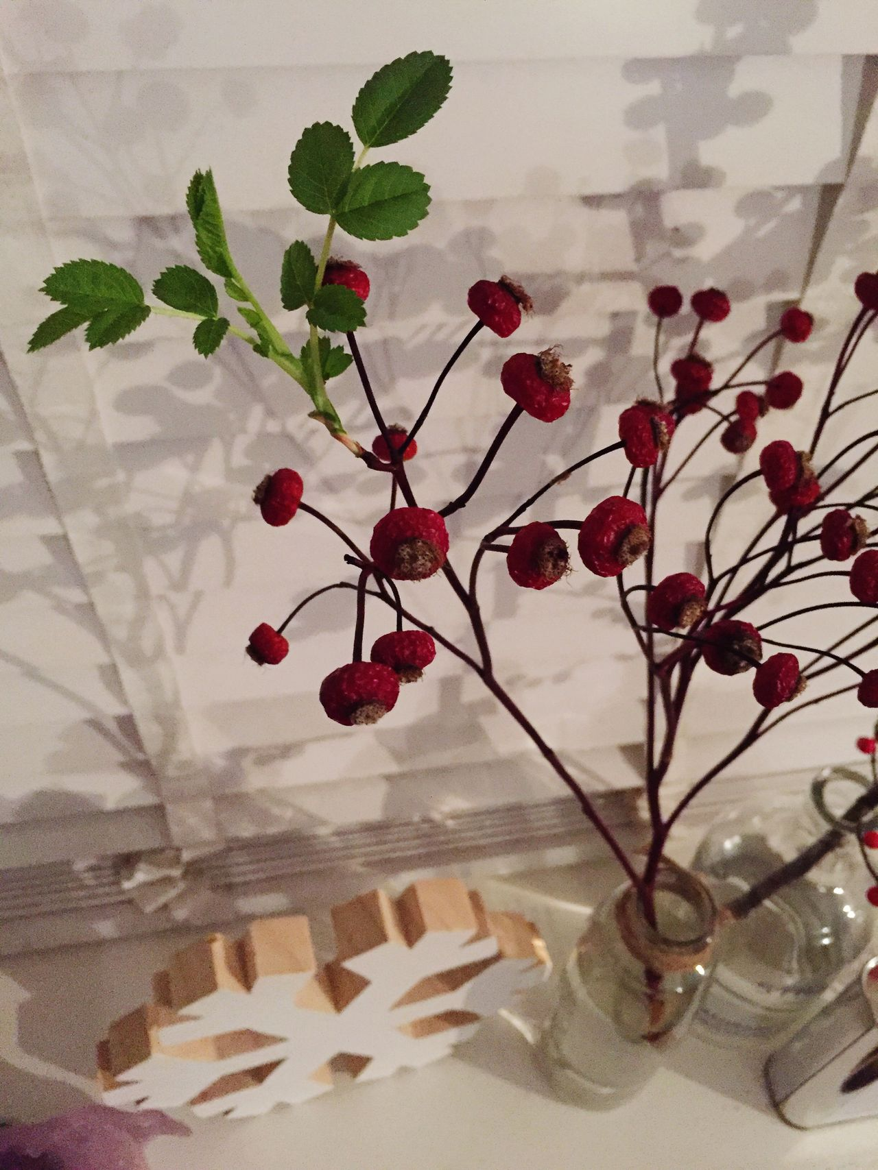 Happy New Life Christmastwig Redberries Green Leaves 2016 Newlife Shadow Whiteblinds