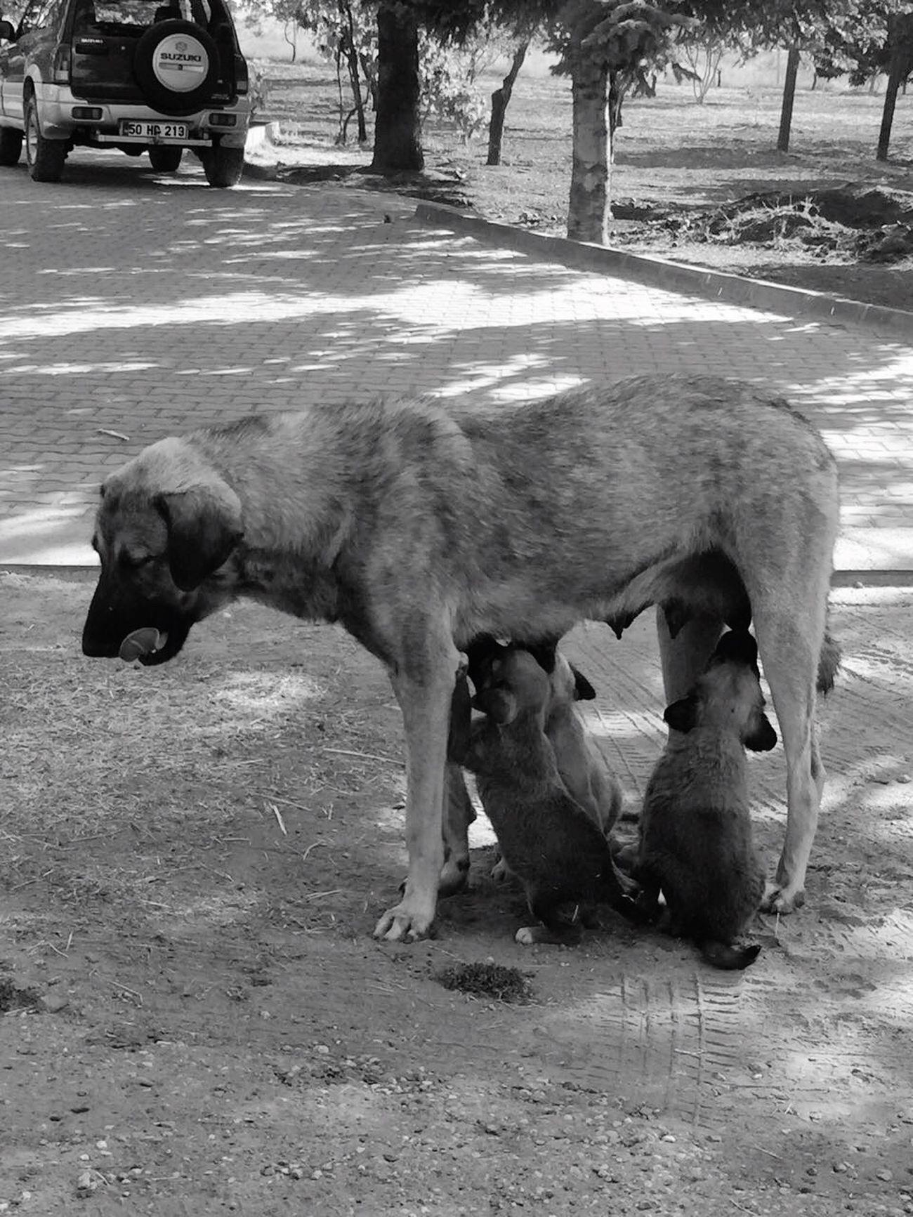 Love Offspring Animals Sweet Animals Motherhood Hello World Turkey Day First Eyeem Photo