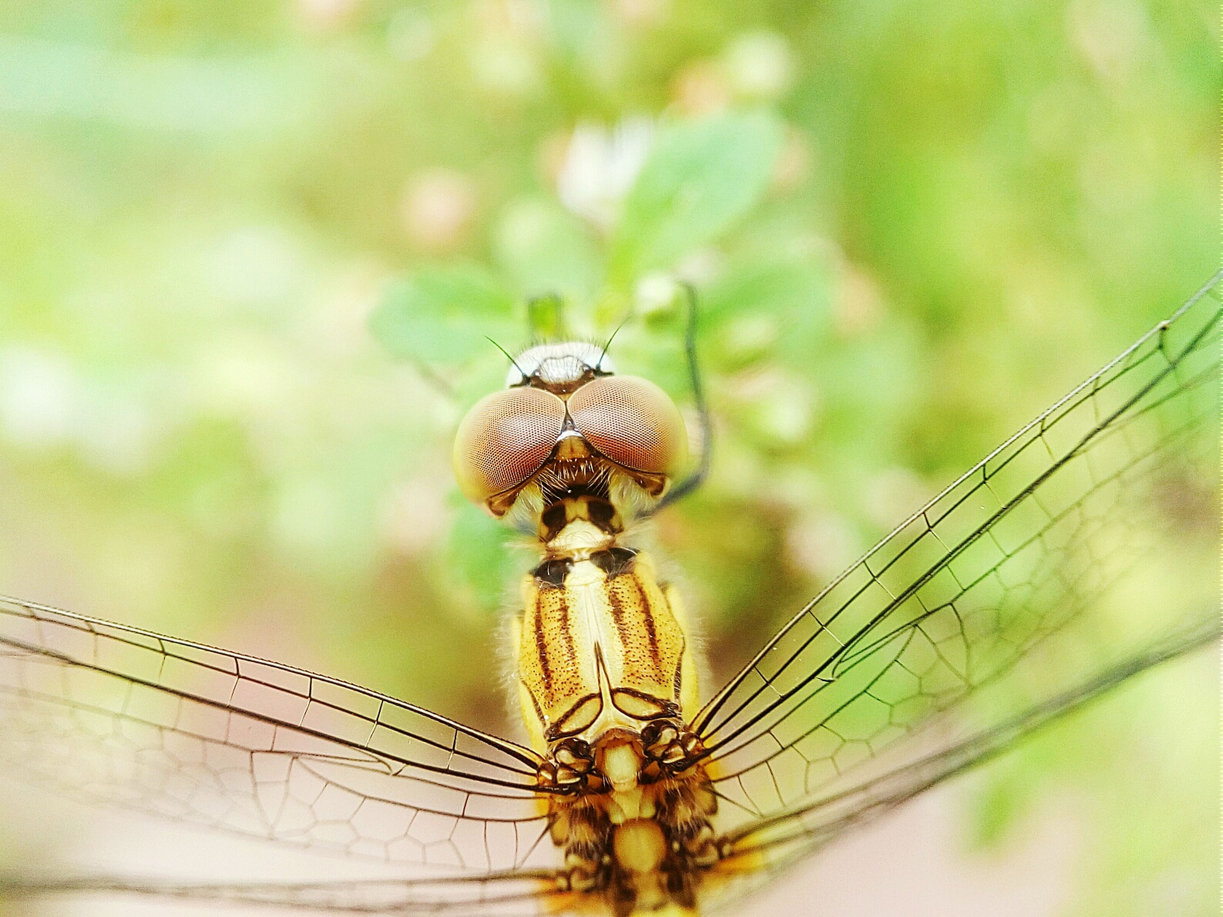 animal themes, animals in the wild, one animal, wildlife, insect, close-up, focus on foreground, perching, animal wing, nature, zoology, dragonfly, day, outdoors, natural pattern, animal antenna, no people, selective focus, full length, animal markings