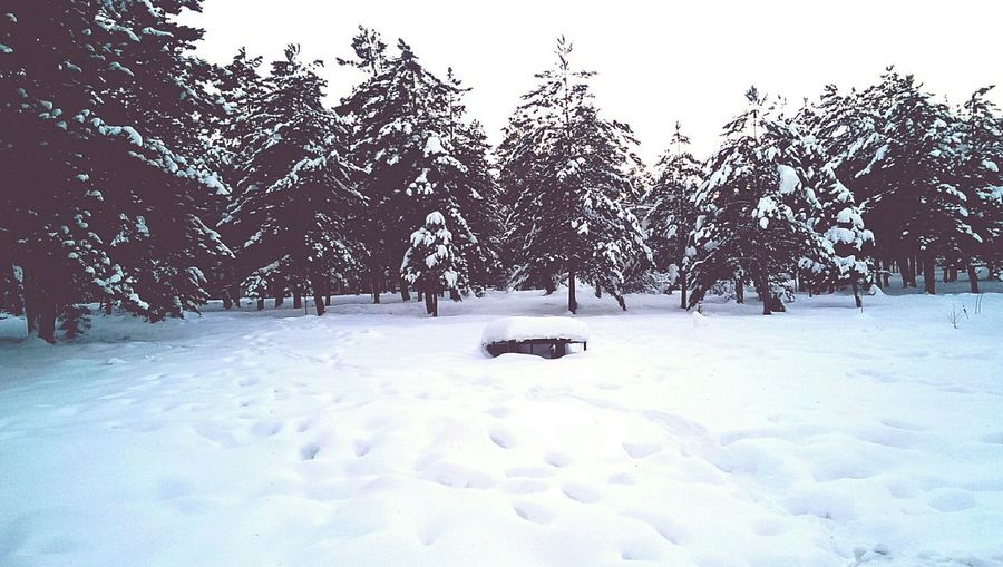 Winter Cold Winter ❄⛄ Wintertime Nature Trees