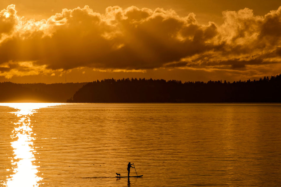 Paddle Boarding with a puppy on a golden sunset evening. Adult Adults Only Beauty In Nature Boarder Cloud - Sky Dog Gold Colored Health Lake Mountain Nature Outdoor Outdoors Paddle People Pets Recreation  Reflection Scenics Silhouette Sky Sport Sportsman Sunset Water