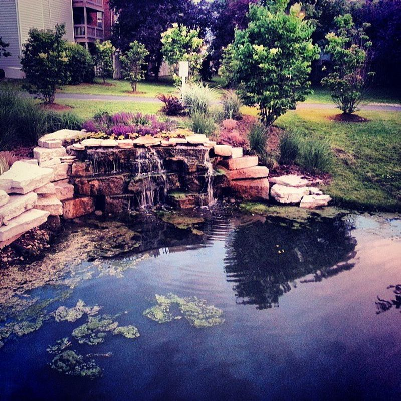 Enjoying the Nature walk in Maneeshs' backyard Summer Waterfall Pond