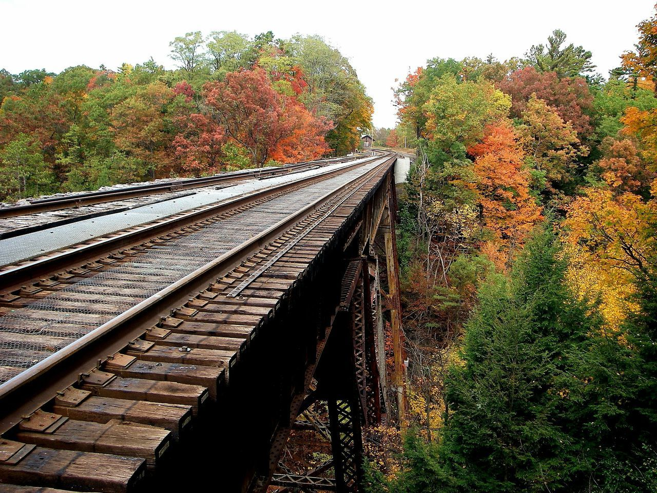 tree, autumn, change, transportation, railroad track, rail transportation, no people, nature, leaf, day, outdoors, growth, scenics, beauty in nature, sky
