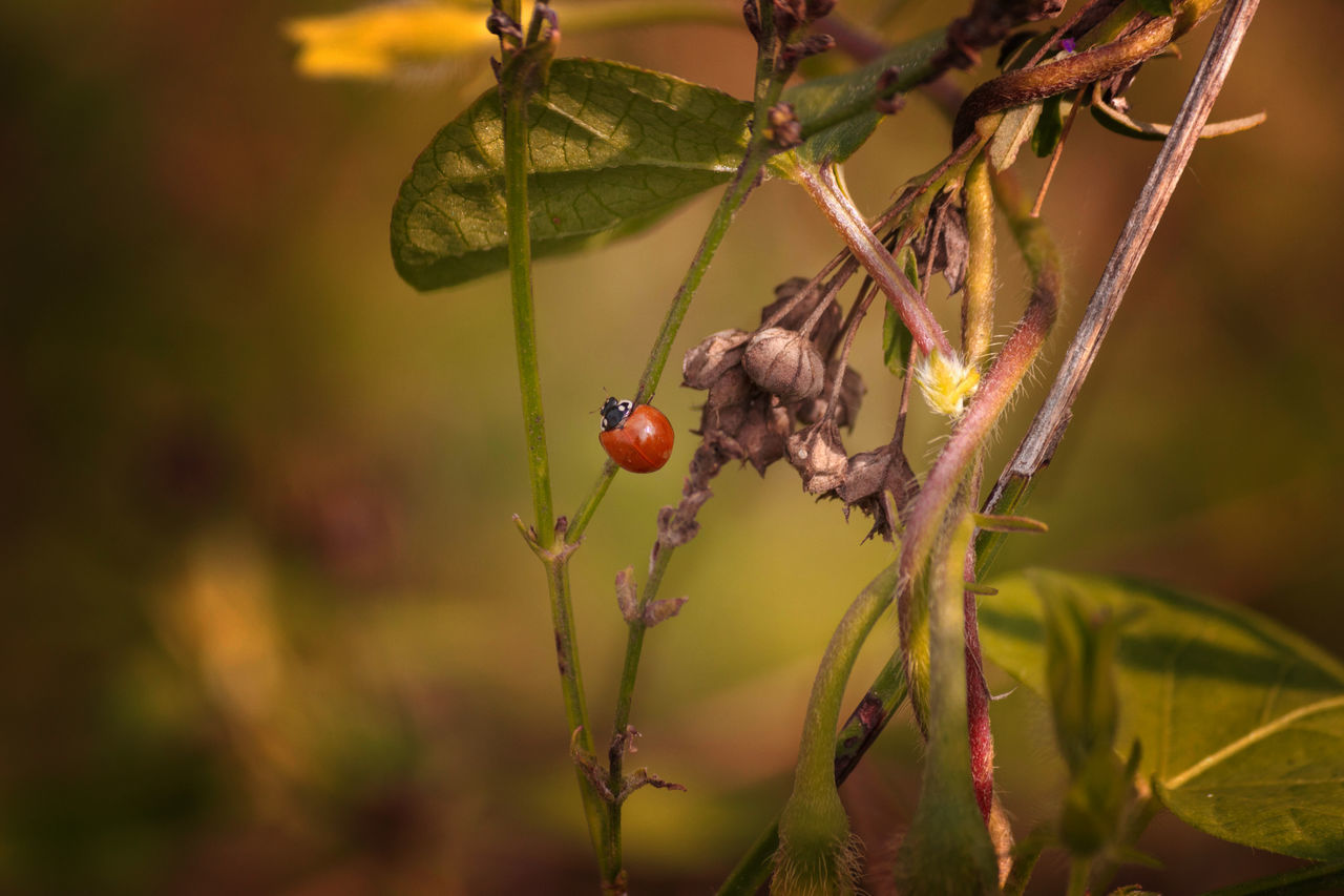 insect, animals in the wild, animal themes, one animal, close-up, focus on foreground, nature, no people, animal wildlife, plant, outdoors, day, beauty in nature, growth, fragility