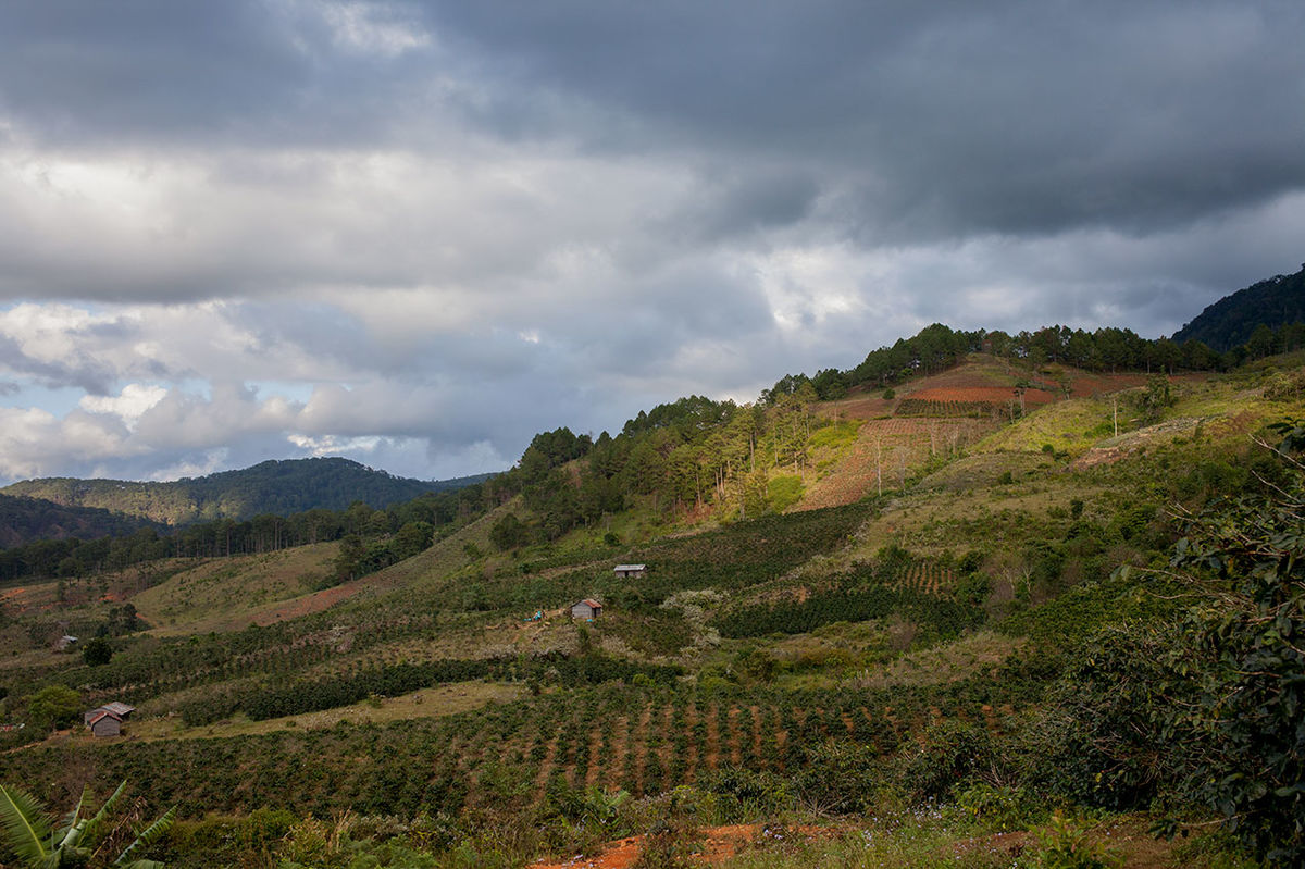 Beauty In Nature Coffee Coffee Cherries Coffee Farm Coffee Plantation Countryside Exploring Hill Landscape Liangbiang Mountain Mountain Range Nature Outdoors Photography Scenics Storytelling Travel Valley Vietnam Voyage