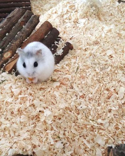 Hamster Love Pets So Cute Cute Pets Love Hamsters