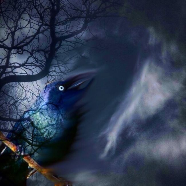 WeAreJuxt.com Blackbird Unitedbyedit #ube_juxtapose