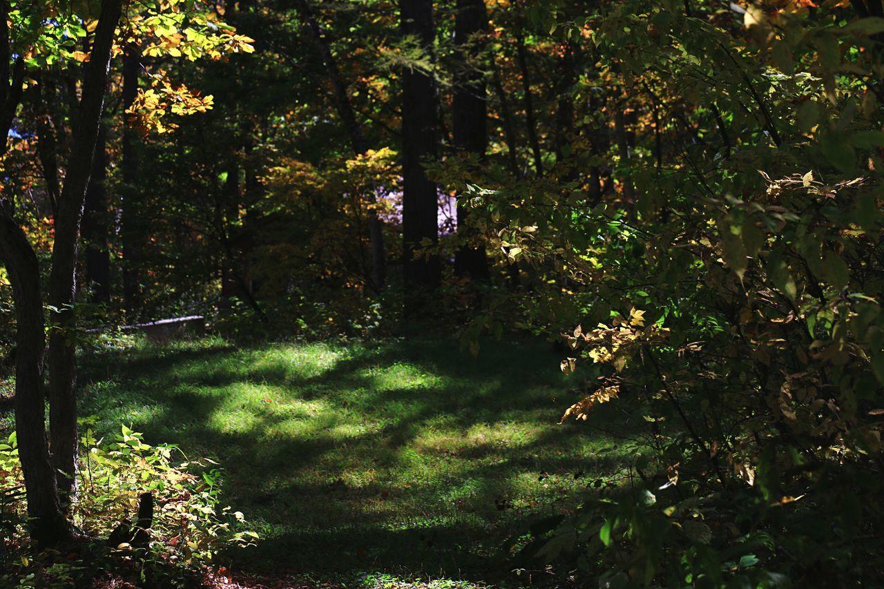 Autumn Beauty In Nature Sunlight Forest Sunshine EyeEm Best Shots