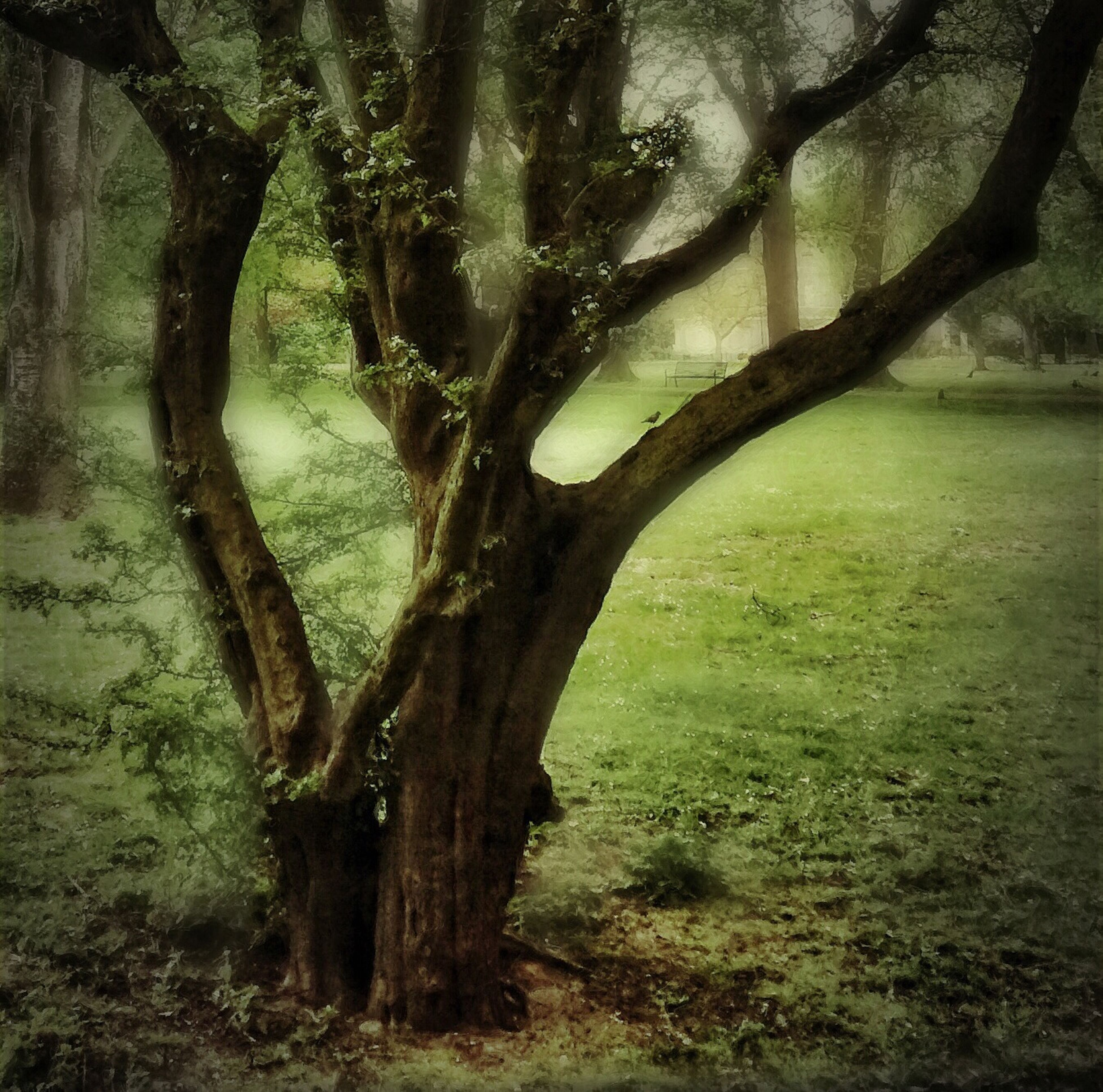 tree, tree trunk, tranquility, tranquil scene, branch, nature, growth, landscape, scenics, beauty in nature, grass, field, forest, bare tree, non-urban scene, woodland, sunlight, no people, idyllic, day
