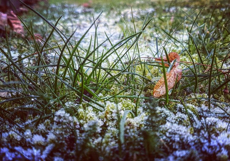 Tree Growth Outdoors Nature Close-up Day Frost Grass Samsung Galaxy S7 Edge