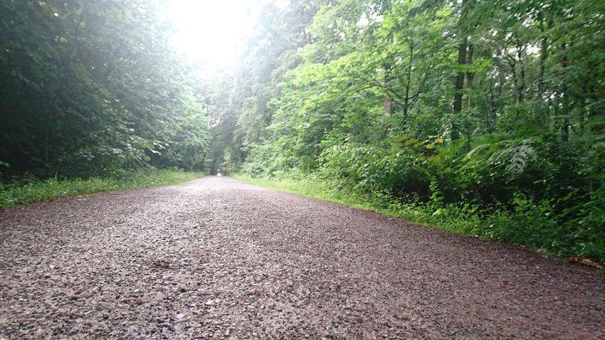 Nature Empty Road Tree Empty