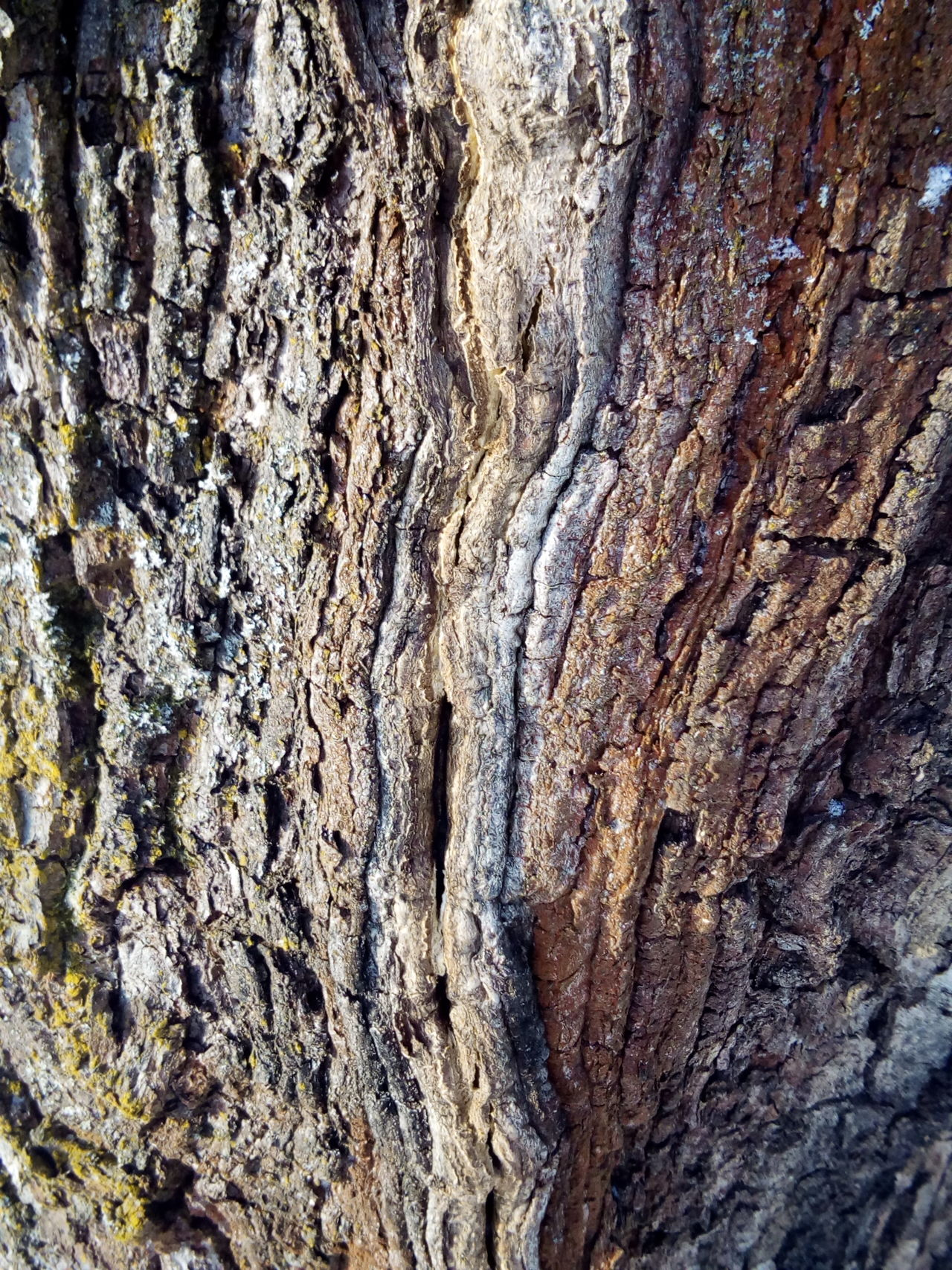 Full Frame Backgrounds Textured  Pattern Nature Cracked Close-up No People Rough Day Outdoors Tree Beauty In Nature Frozen Texrure Forest Winter Tree Trunk Branch EyeEm Nature Lover Nature_collection The Great Outdoors - 2016 EyeEm Awards Nature Water Beauty In Nature