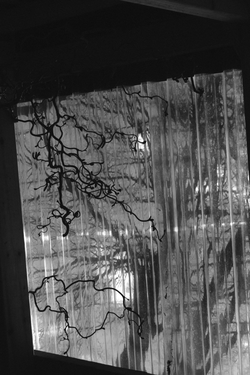 Indoors  Natural Light Lines Hanging Branches Low Angle View Blackandwhite Art Is Everywhere