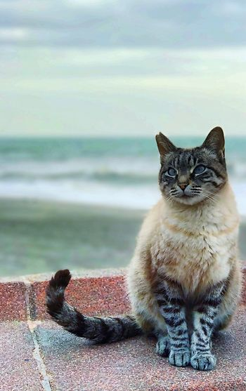 Domestic Cat One Animal Domestic Animals Animal Themes Pets Sea Mammal Looking At Camera Sitting Portrait Feline Nature Day Close-up No People Outdoors Beach Water Sky Gato Mar Profundidad EyeEmNewHere