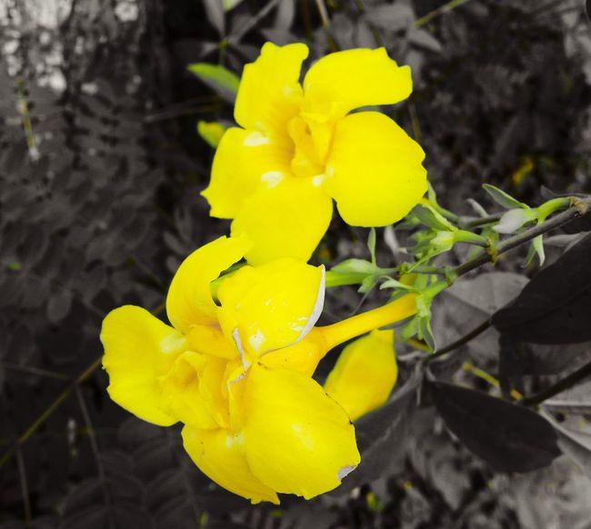 Girlysaturninophotography Flower Photography Nature Photography Nature_collection Flower Flowers,Plants & Garden Flowerlovers Eyem Philippines The Week Of Eyeem Eyeem Philippines