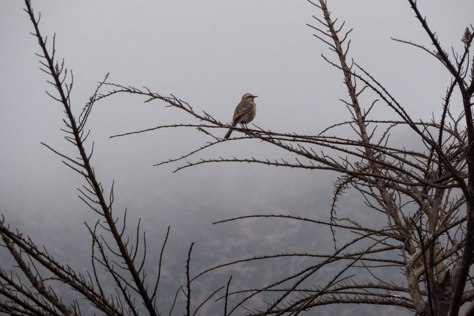 Love birds. Camera: CanonPowershot SX50 Animal Themes Animal Wildlife Animals In The Wild Bald Eagle Bare Tree Bird Bird Of Prey Branch Clear Sky Closeup Cloudy Cold Temperature Day Low Angle View Nature No People One Animal Outdoors Outside Perching Sky Tree Wild