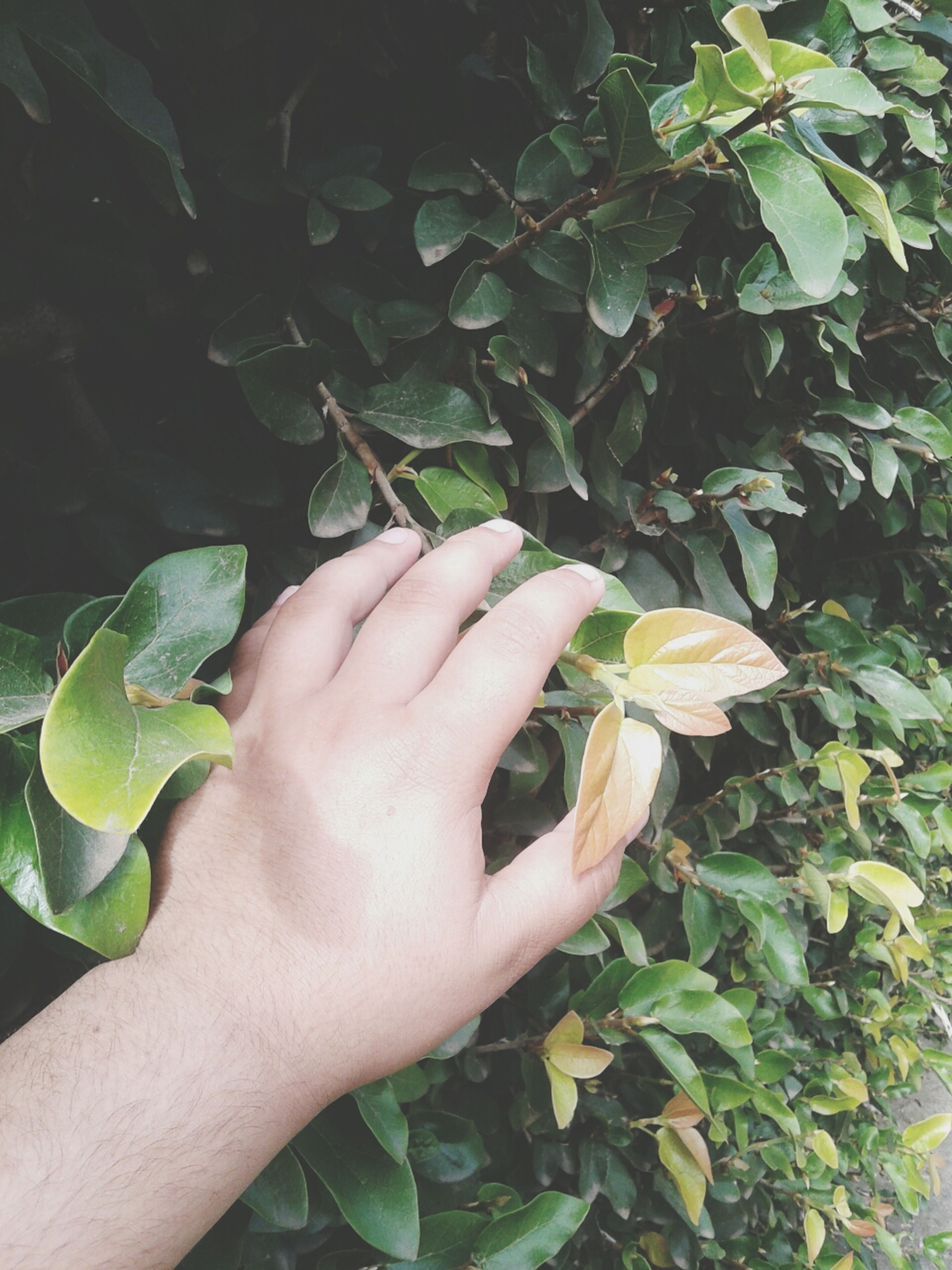 person, leaf, part of, cropped, human finger, holding, personal perspective, unrecognizable person, close-up, plant, green color, growth, leisure activity, lifestyles, nature, focus on foreground, outdoors