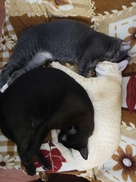 Cat Cat Thailand :)