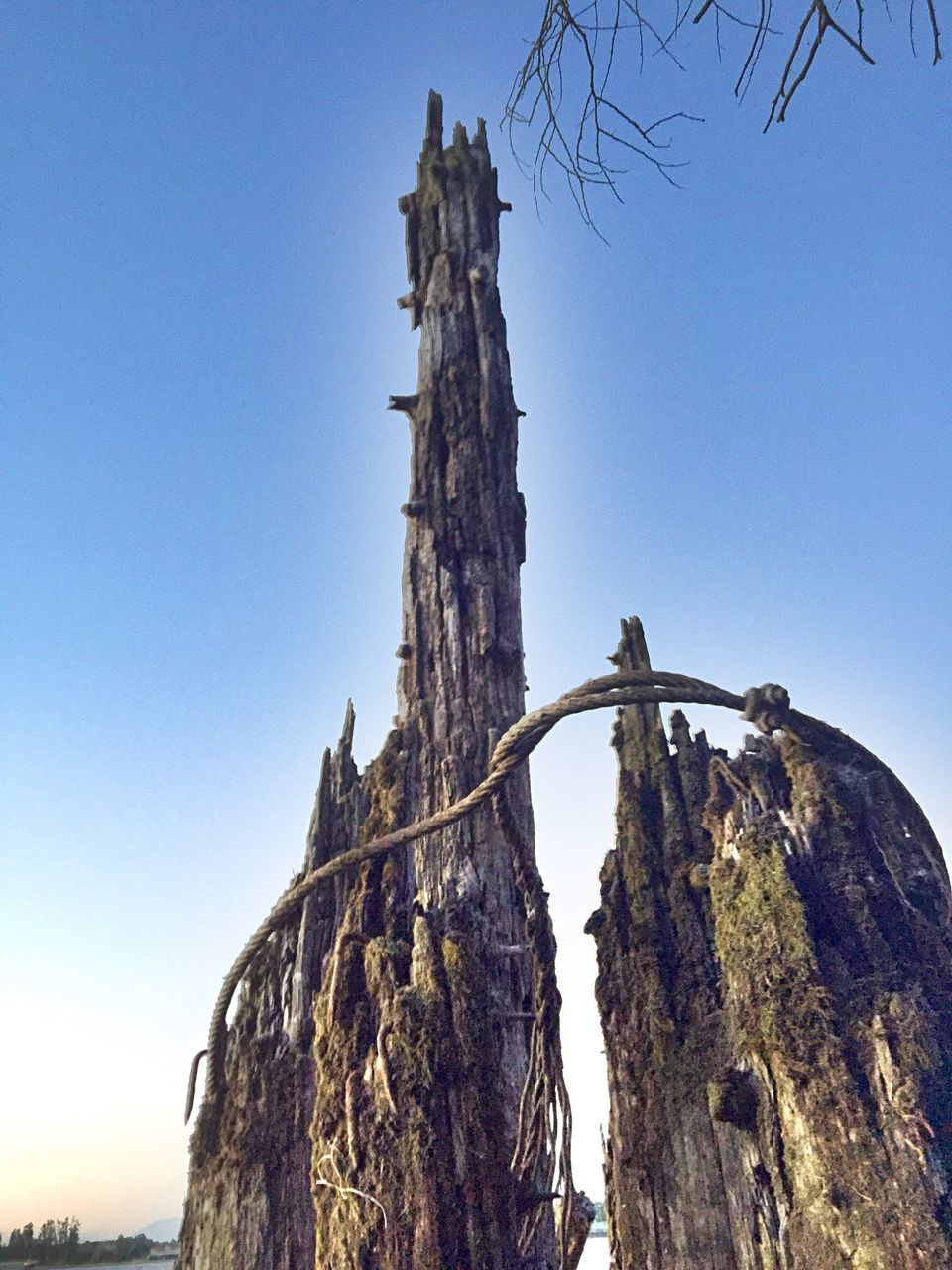 Low Angle View Of Rope Tied To Weathered Tree Trunk Against Sky