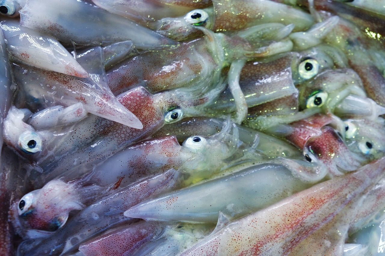 ギョギョッとした眼の烏賊🦑🦑🦑✨ Squid Visual Feast Market Fish Market Eye4photography  EyeEm Best Shots The Street Photographer - 2017 EyeEm Awards EyeEmNewHere 烏賊 Freshness Water_collection Fish Outdoors Beauty In Nature Water Sea