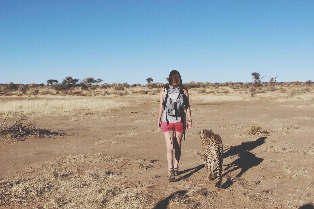 Wildlife Namibia Africa Cheetah Amazing Southern Africa Animals