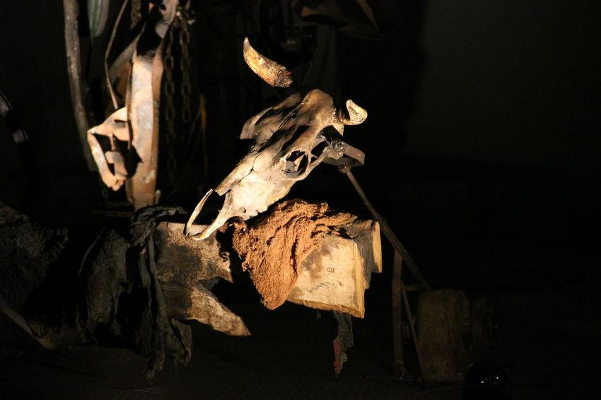 Animal Art Close-up Day Indoors  Machine No People Skeleton Skull Skulls