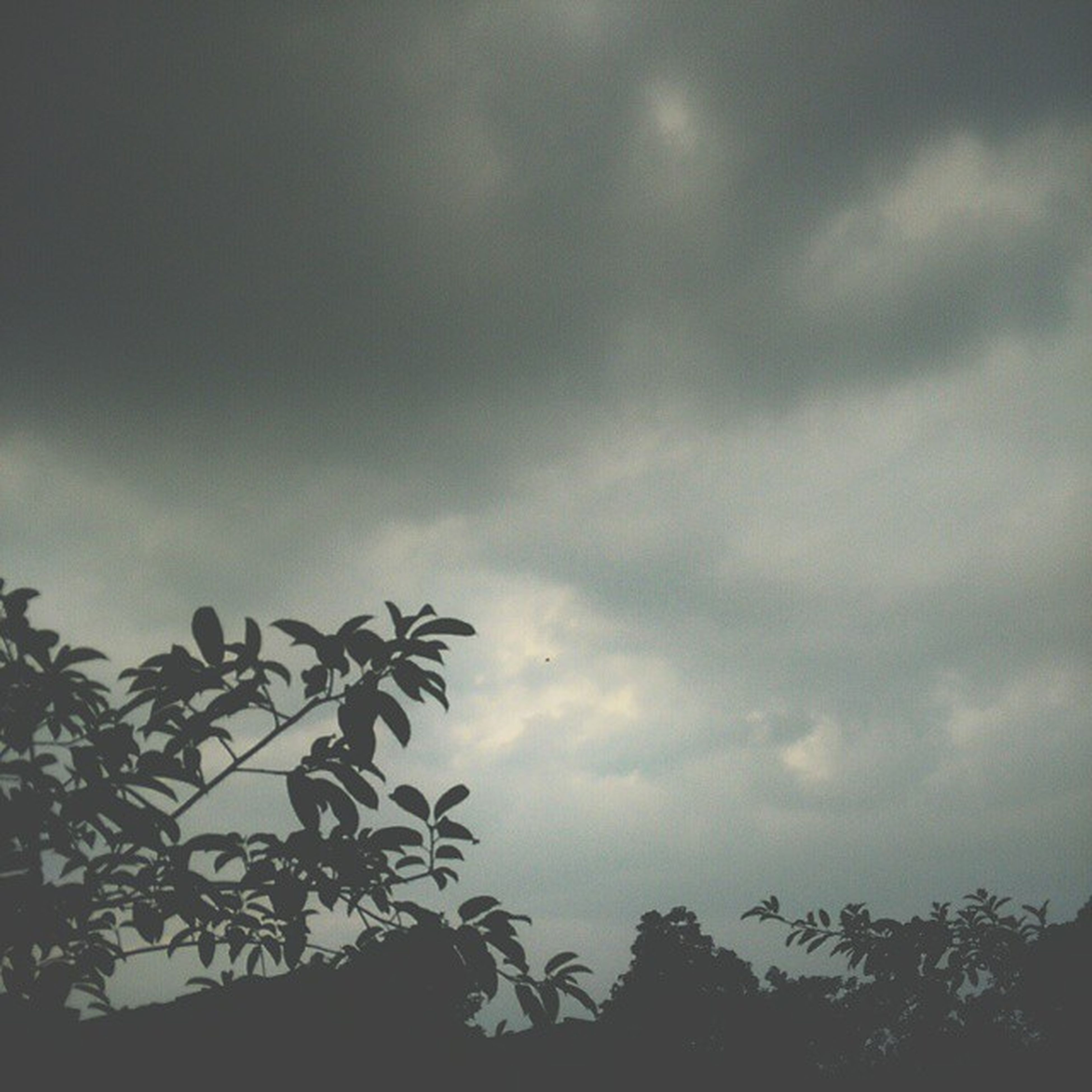 sky, low angle view, cloud - sky, silhouette, tree, cloudy, tranquility, nature, beauty in nature, overcast, weather, growth, scenics, cloud, tranquil scene, dusk, branch, outdoors, high section, no people