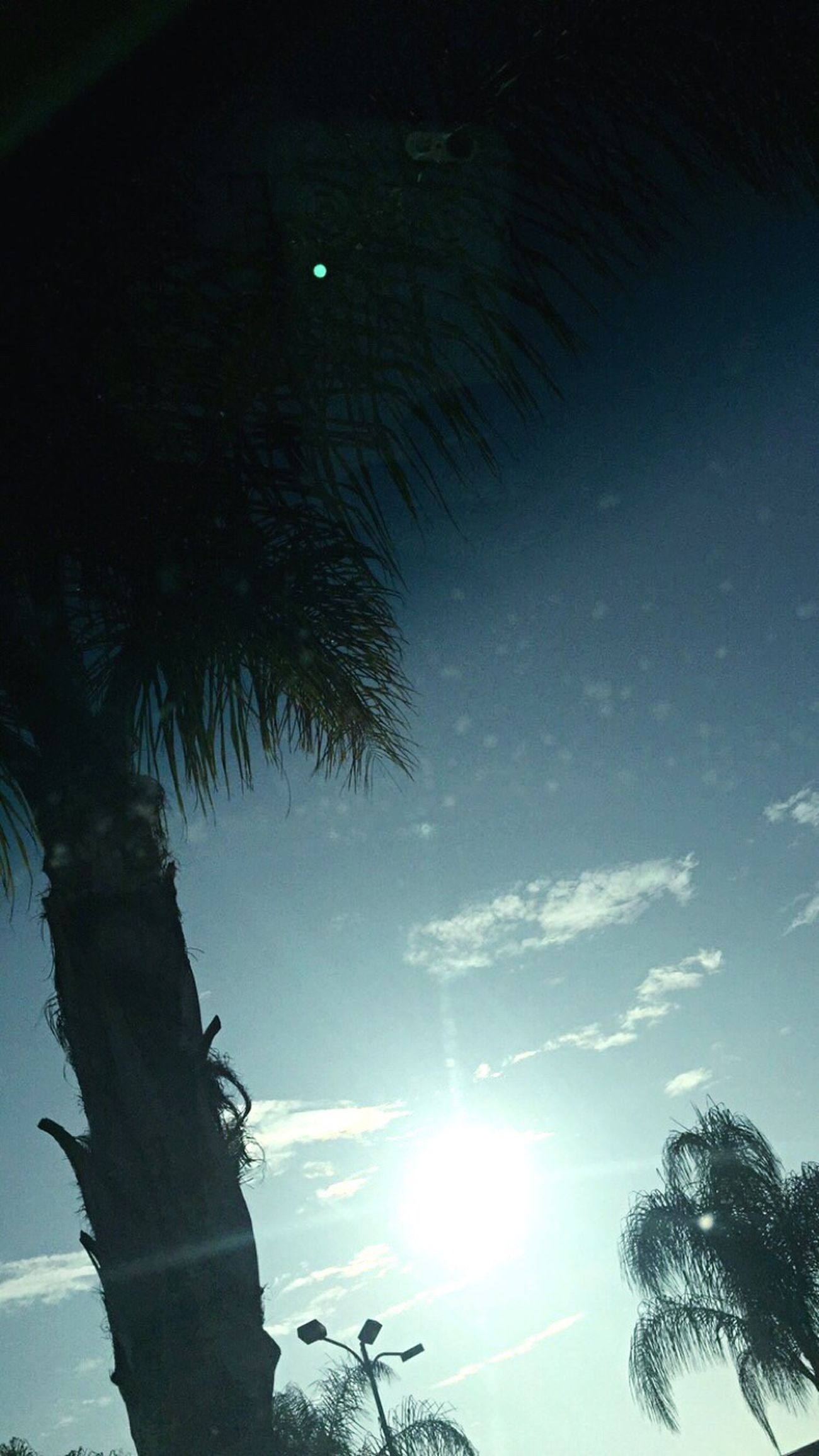 Palm Tree Beautiful Day In A Parking Lot Dirty Windshield Check This Out Blue Sky