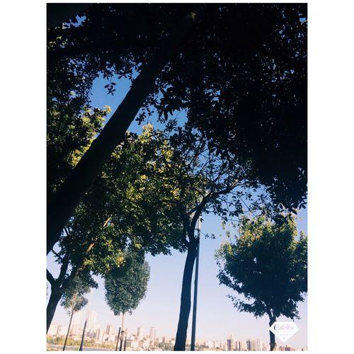 Trees Tbt Summer Kadıköymoda Objektifimden Benimkadrajim