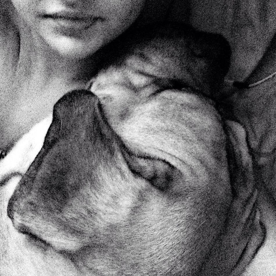 мой милый пес Home пораспать