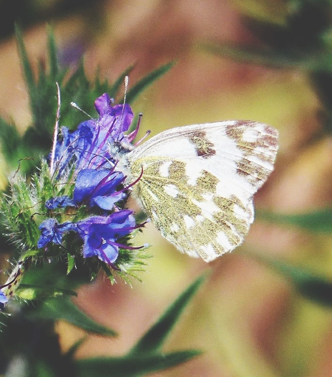 insect, animal themes, one animal, animals in the wild, flower, butterfly - insect, nature, close-up, no people, fragility, plant, day, beauty in nature, butterfly, growth, focus on foreground, outdoors, freshness, pollination, animal wildlife, flower head