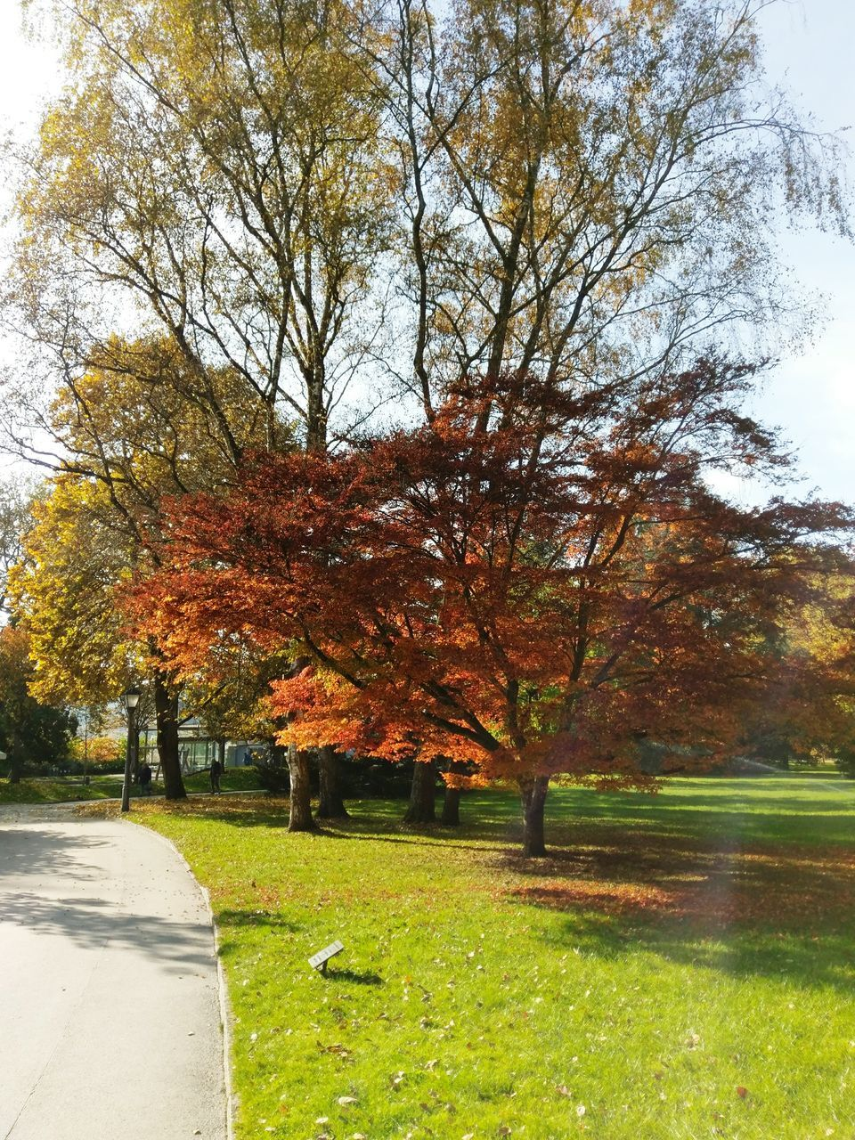 tree, autumn, nature, change, tranquility, beauty in nature, tranquil scene, grass, outdoors, day, scenics, leaf, growth, no people, the way forward, green color, park - man made space, branch, sky