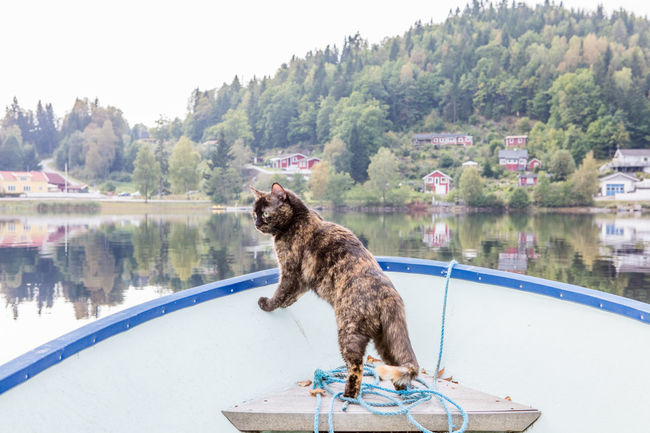 Boat Calm Cat Countryside Day Lake Mirror Lake No People Outdoors Sweden Tranquility