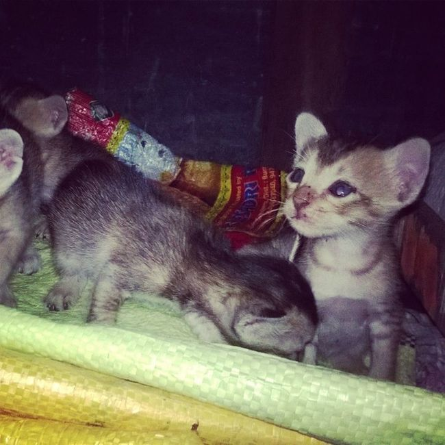 Pushy cat 🐱 Lumiaphotography FamilyTime Livesukanta