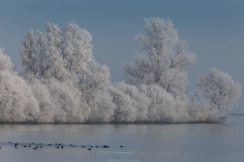 Frost on everything !!! Cold Weather Cold Winter ❄⛄ Day Freezing Ice Age Nature Nature On Your Doorstep Nature_collection Outdoors Winterwonderland