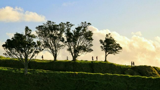 People Silhouettes amongst Trees on Mount Eden in Auckland / Sunset New Zealand Silhouettes Light And Shadow Panoramic View Scherenschnitt Traveling Travelling Calm Hillside Urban City Escape Urban Refuge Viewpoint Volcano Grass Nature In The City Nature Showcase April The Great Outdoors - 2016 EyeEm Awards Nature's Diversities