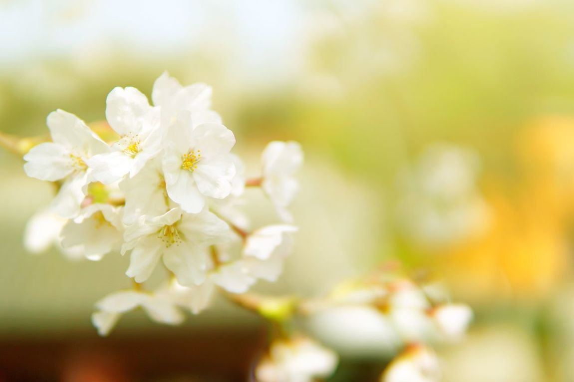 Nature White Color Close-up Flower Growth No People Fragility Beauty In Nature Day Freshness Outdoors Flower Head