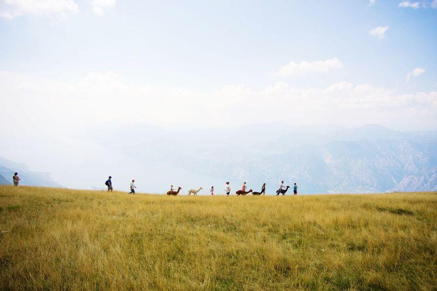 Lama Sitting Mountains Summer Views Italia Lago Di Garda Gardasee Protecting Where We Play Seeing The Sights Visual Trends SS16 - The Rise of Nature The Great Outdoors With Adobe The Great Outdoors - 2016 EyeEm Awards